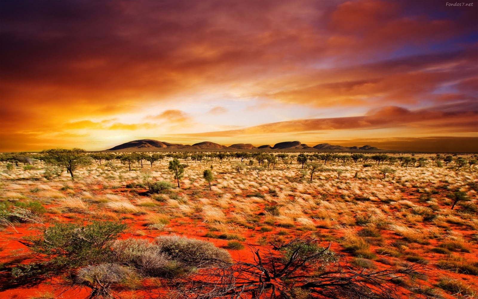 Seiya(Kenshin) vs  Jyu Viole (TheHooded) EN EL DESIERTO  Atardecer+en+el+desierto