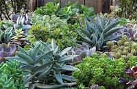 plantas mediciais