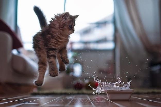 Album hình ảnh mèo con đáng yêu nhất, anh meo con