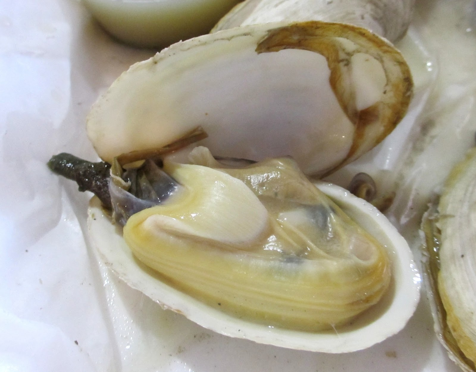 Cannundrums: Dans Clam Stand - Crystal River