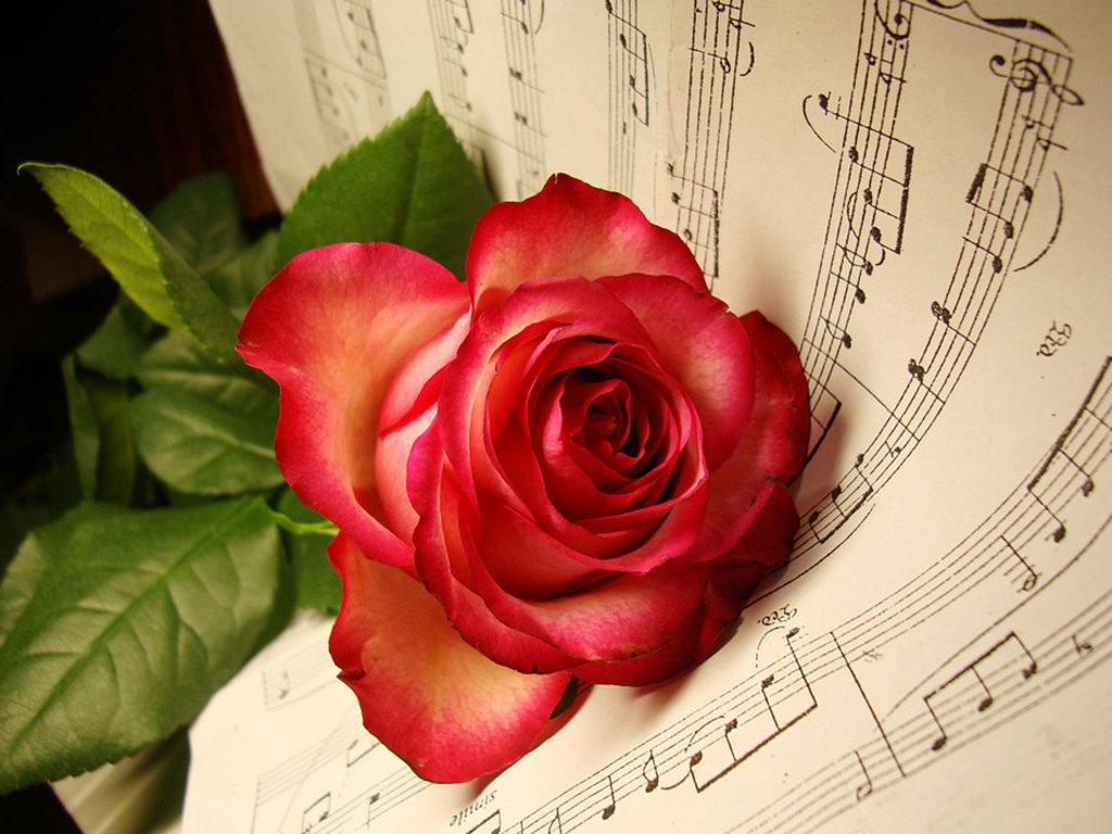 http://2.bp.blogspot.com/-As-GGm1xZvE/TwfUEkdJkfI/AAAAAAAABTQ/Hs7Iimr_Rkg/s1600/8.+Red+Musical+Flowers+Wallpapers.jpg
