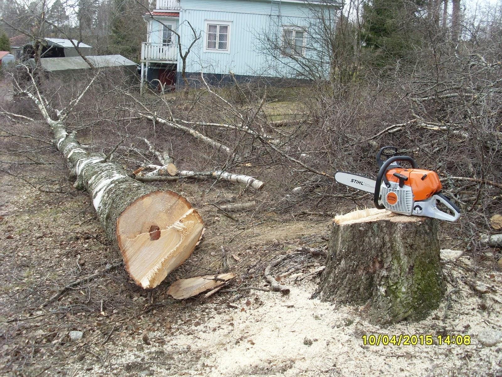 Pihakoivujen ja muidenkin pihapuiden kaadot Tampere Pirkanmaa alueilla käteisellä