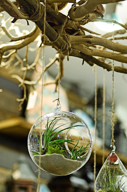 terrariums hanging on branches