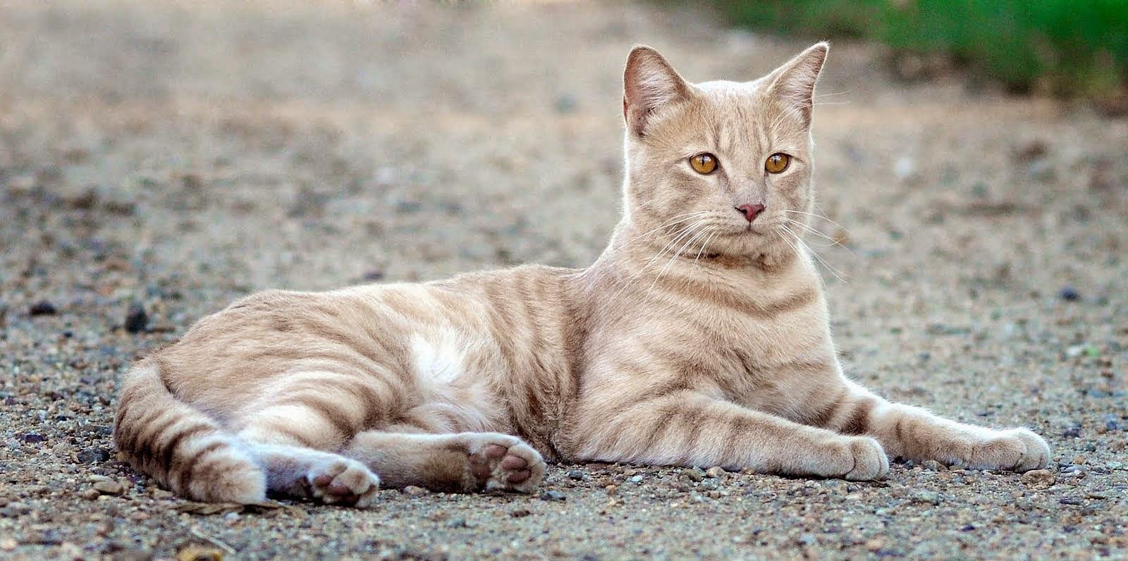 �Que hacer si me encuentro un gato en la calle?