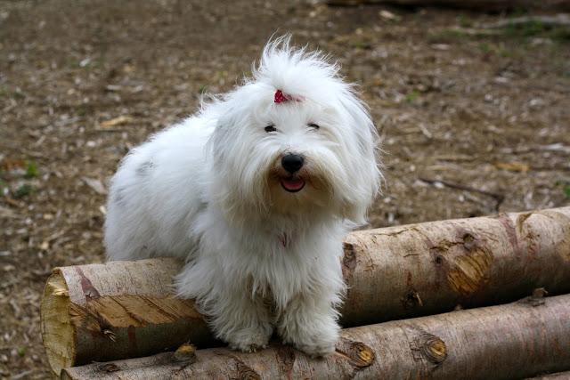 hundeskon fyn, hundeskov, fyn