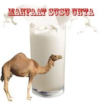 Manfaat Susu Unta Bagi Kesehatan