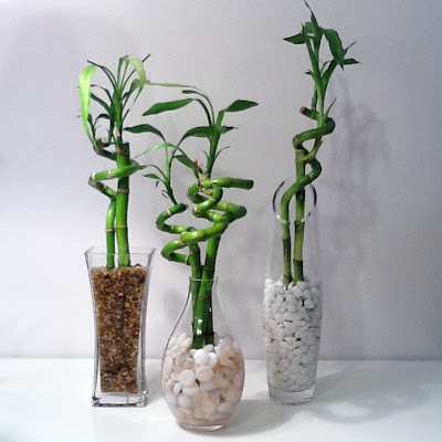 Thrifting is therapy lucky bamboo for you thrift store for Bambou interieur deco