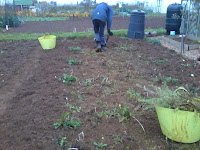 allotment cleared of weeds