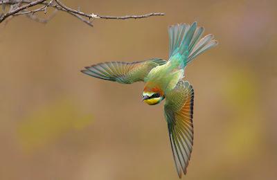 Pajarillo de colores - Bird of the paradise