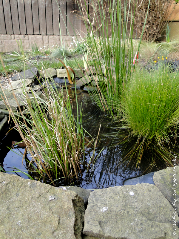 Sharing My Wildlife Pond Projects To Give Others