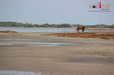 A horse and a bird in dhanushkodi