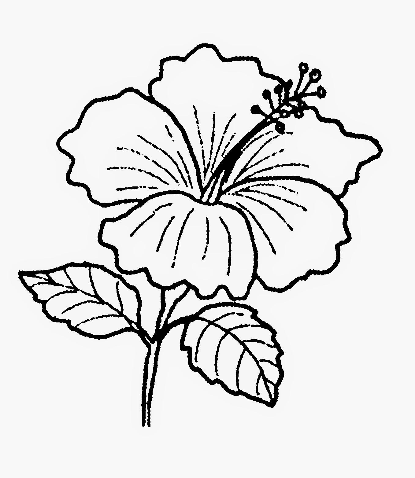 Gambar Bunga Matahari Hitam Putih Iv Kumpulan Gambar