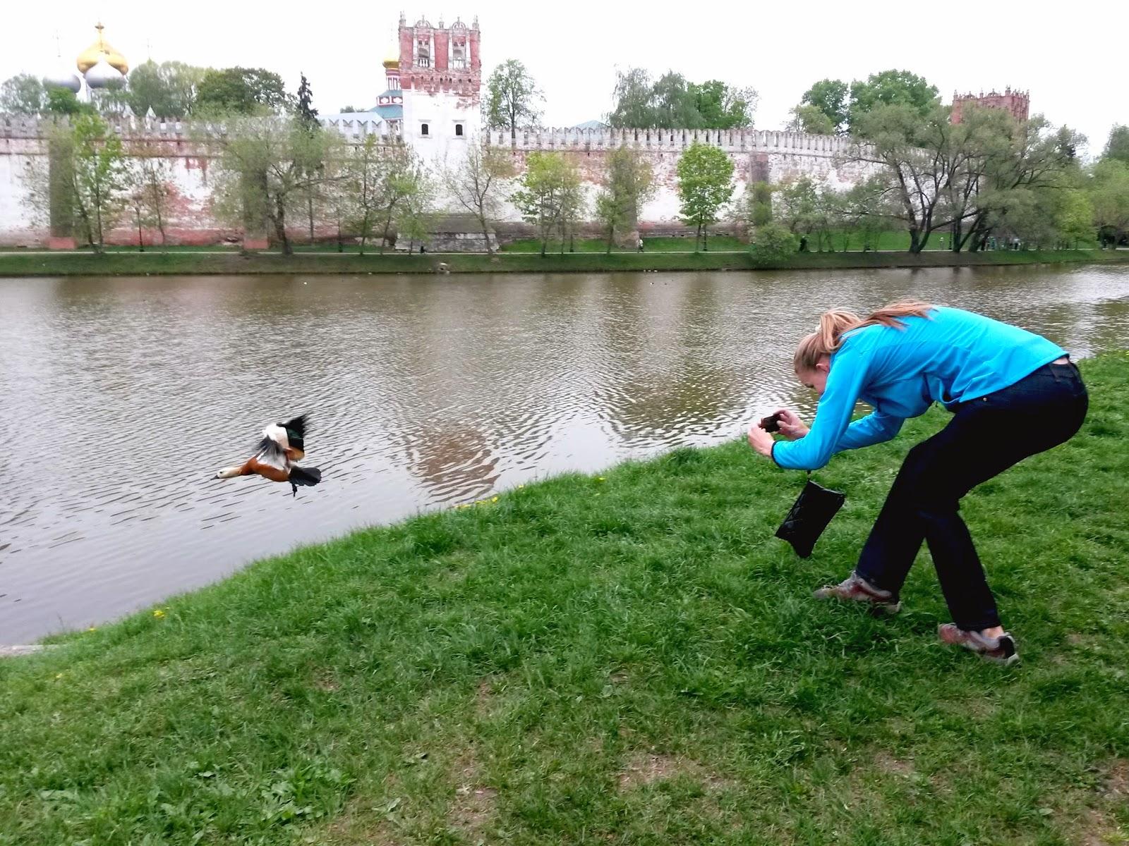Охотница за пернатой дичью 10 Мая 2014 Новодевичьи пруды
