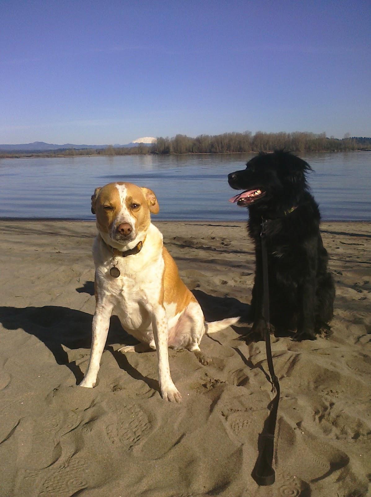 Sauvie Island Beach Dogs