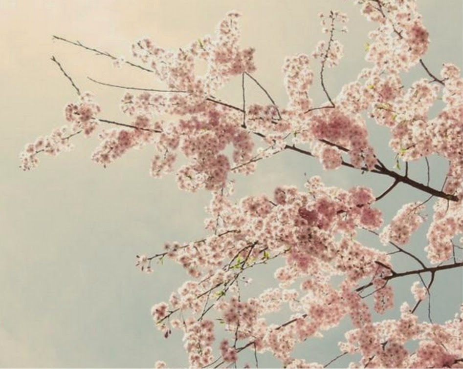 https://www.zibbet.com/seelifeshine/cherry-blossom-print-cherry-blossom-photo-flower-photography-pink-decor-pink-gray-decor-pink-wall-art-the-softest-sky-8x10