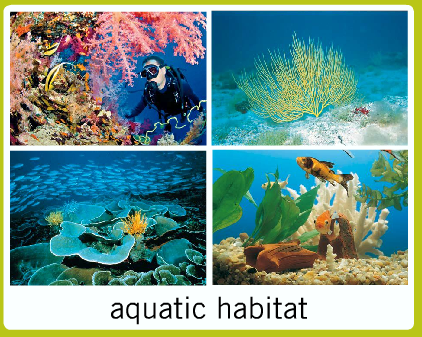 Different Habitats For Different Animals Video For Kids
