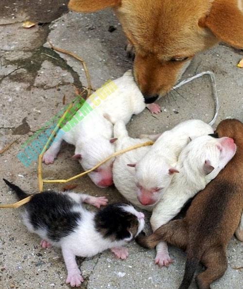 Foto: Heboh Anjing Melahirkan Kucing Di Korsel [ www.BlogApaAja.com ]