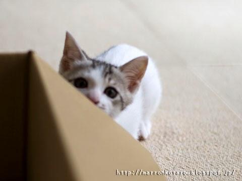 物陰から狙う仔猫