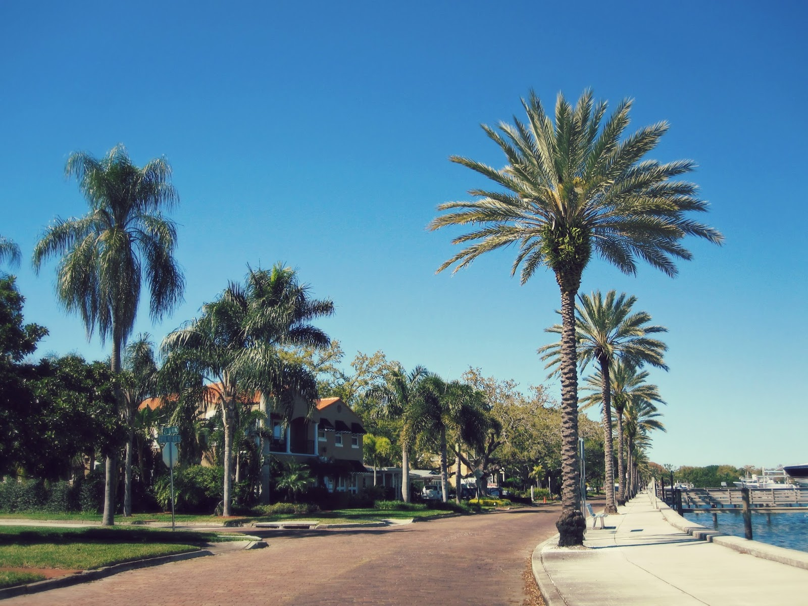 Spring Break In Florida, palm tree, florida palm trees, sorrow, grief