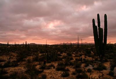 cactus land