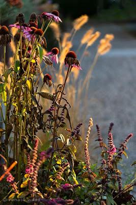 Herbst im Garten - leuchtende Farben, strahlende Gräser