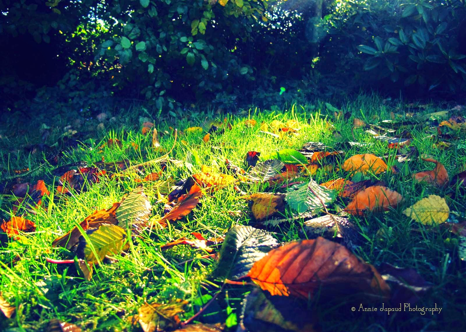 autumn, leaves on grass, light