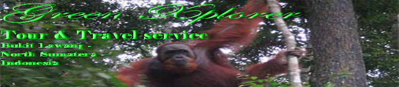 Green Xplorer  l  Survival The Wild Green Jungle  l  Bukit  Lawang  l  Indonesia