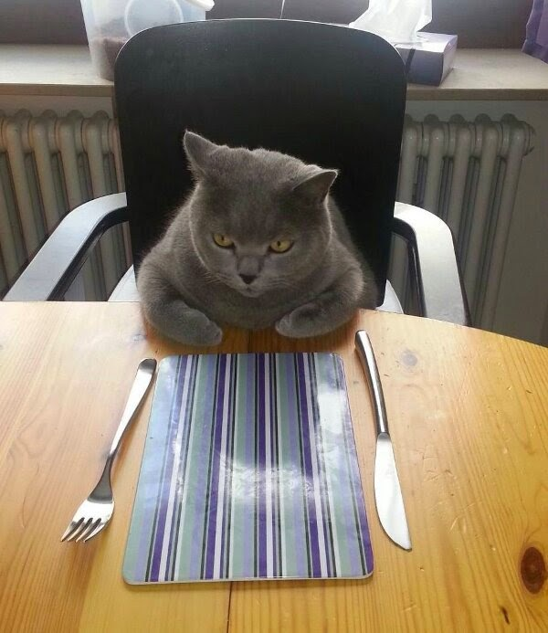 Funny cats - part 99 (40 pics + 10 gifs), cat pictures, cat waiting for dinner
