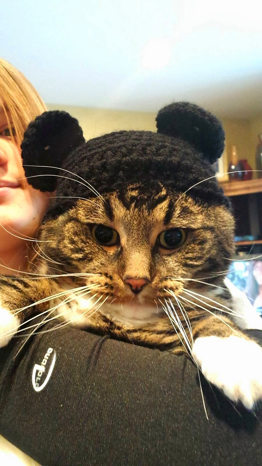 Funny cats - part 95 (40 pics + 10 gifs), cat pictures, cat wears mickey mouse knitted hat