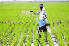 Lahan Pertania Di Jogja Hanya Tinggal 65 Hektar