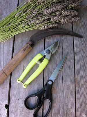 Lavender Pruning Tools