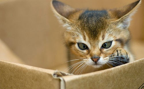 Polisi Privasi Kucing