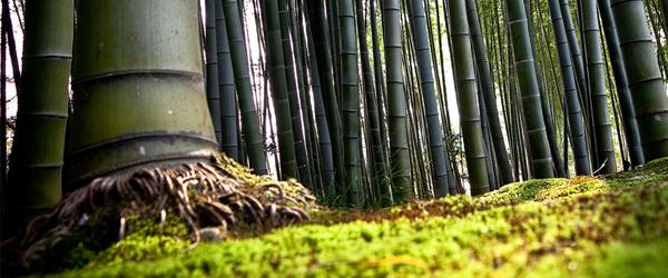 [Imagen: bambu.jpg]