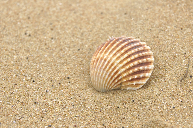 macro-shell-seaside