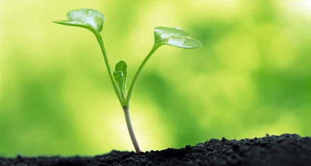 Planta y organismos autotrofos