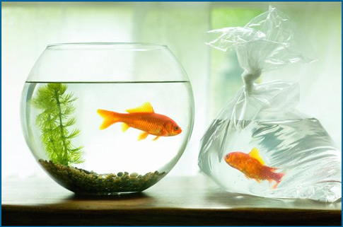 Do your homework better and faster for Petco fish bowl