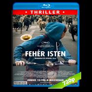 Hagen y yo (2014) BRRip 720p Audio Dual Latino-Hungaro