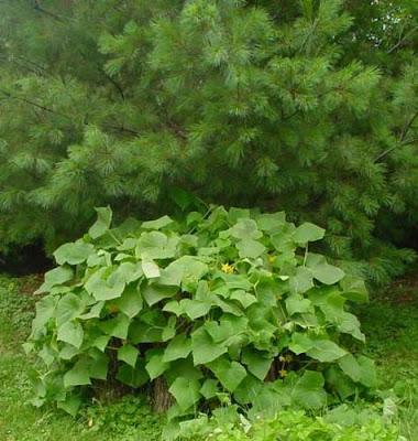 Огородные секреты-2 Урожай из мешка