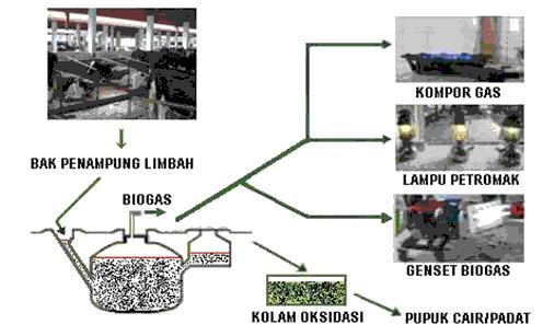Model layout 3. usaha peternakan dengan biogas dan olahan limbahnya ...