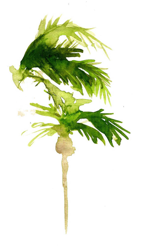 Un palmier dans la cour palmiers un jour palmiers toujours for Palmier dans pot