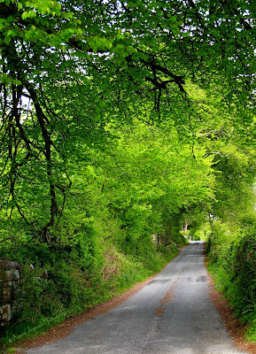 small country road, surrounded by green trees