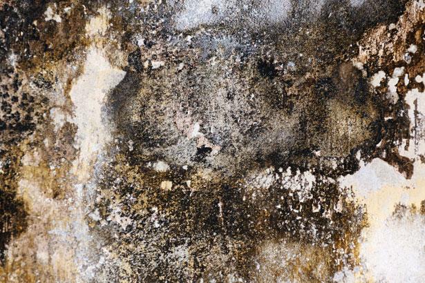 Can. HOME DECOR  Mold allergy symptoms  Black mold symptoms