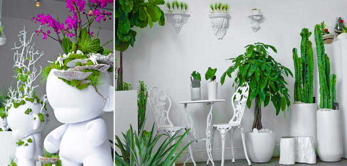 Beautiful Plants For Home Beautiful Plant 1