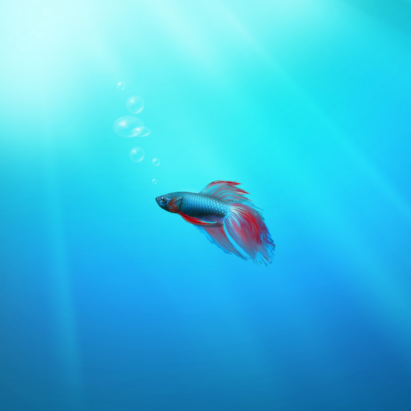 hd wallpapers 1800dpi hd wallpaper of fish 1800dpi