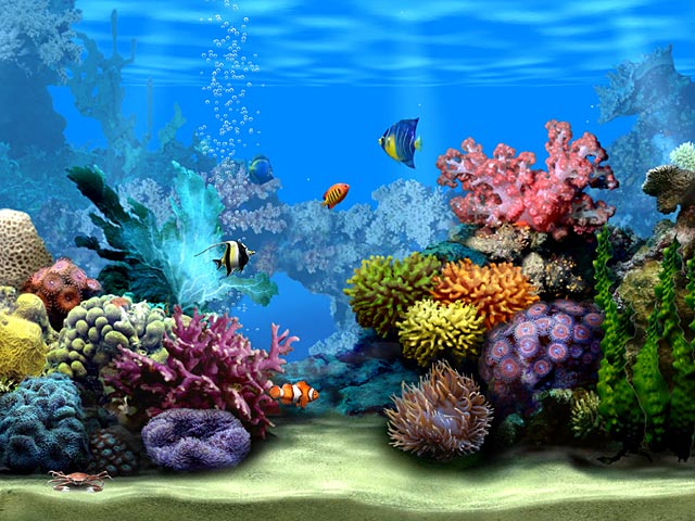 Wallpaper gallery free moving wallpapers for Moving fish screensaver
