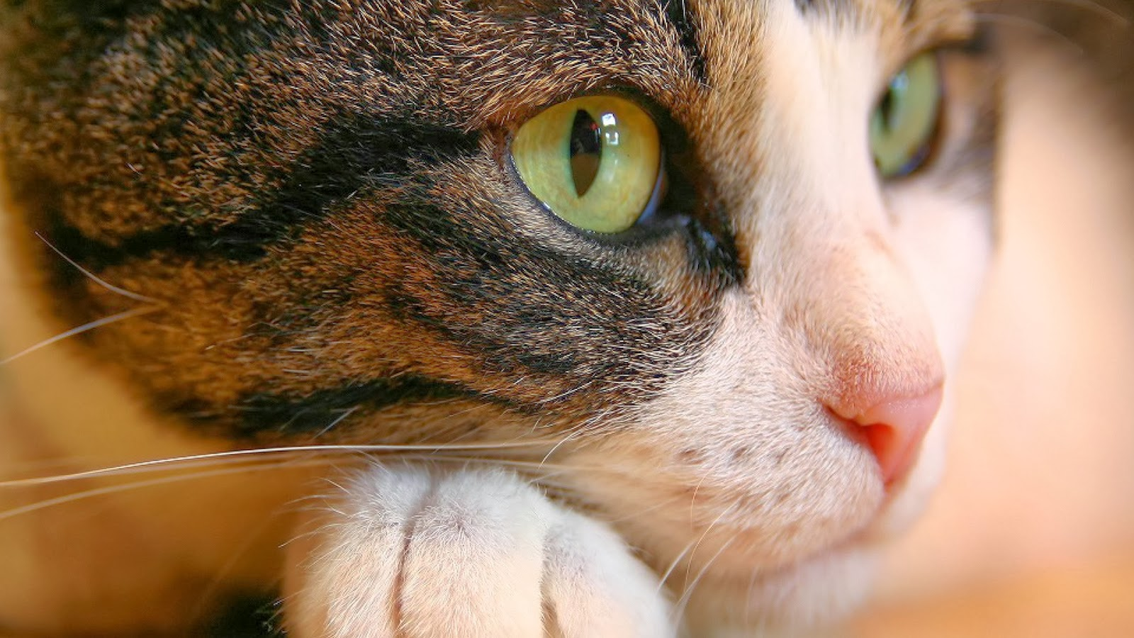 Cat Eyes Funny Wallpapers ~ Funny Wallpapers