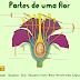 Conheca as partes da flor nesse jogo