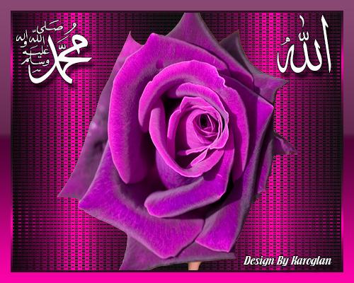 [Resim: allah-muhammed-yazili-pembe-gul.png]