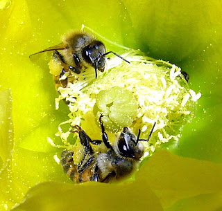 Bees images