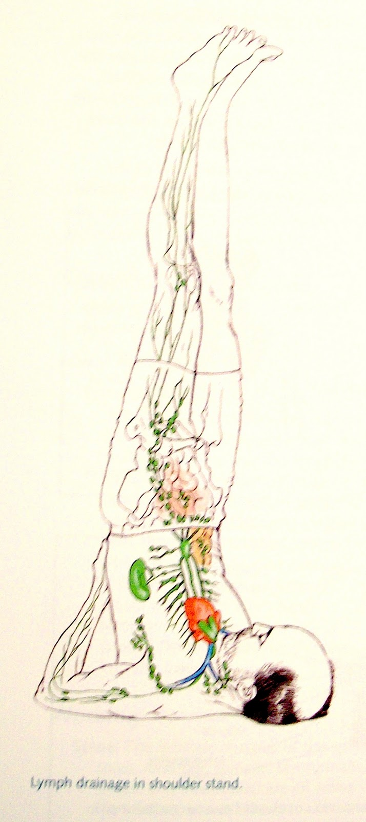 Islands Of Grace: Restorative-Yin Yoga Journal: The Lymphatic System